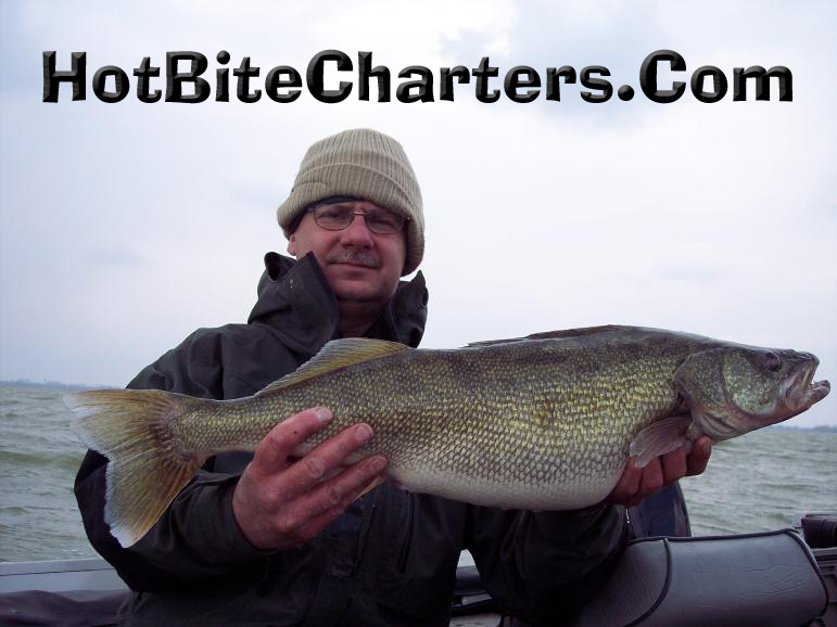 11-5-pound-lake-erie-walleye-caught-trolling-in-march