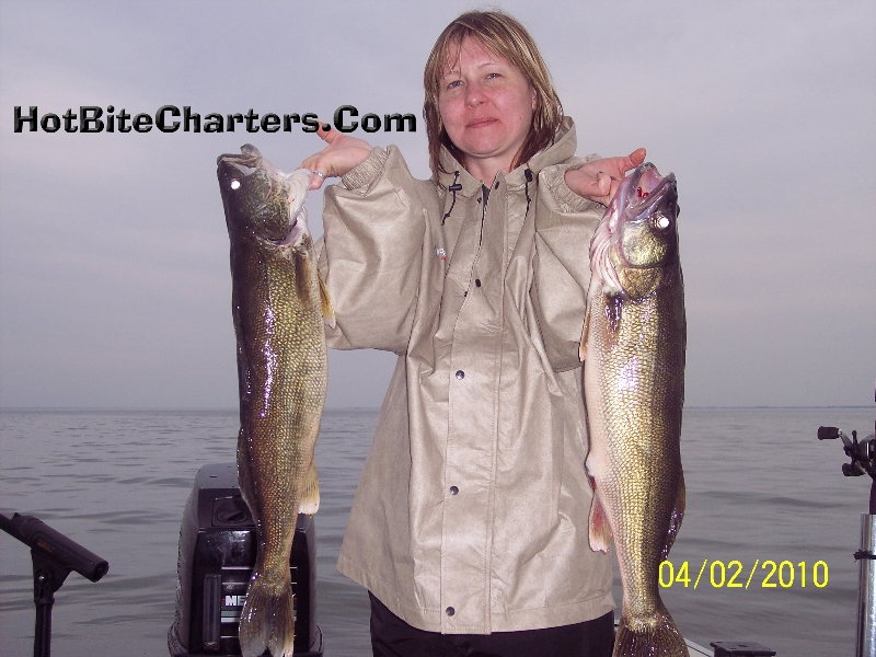 monroe-michigan-walleye-caught-trolling-april-first-crawler-harnesses