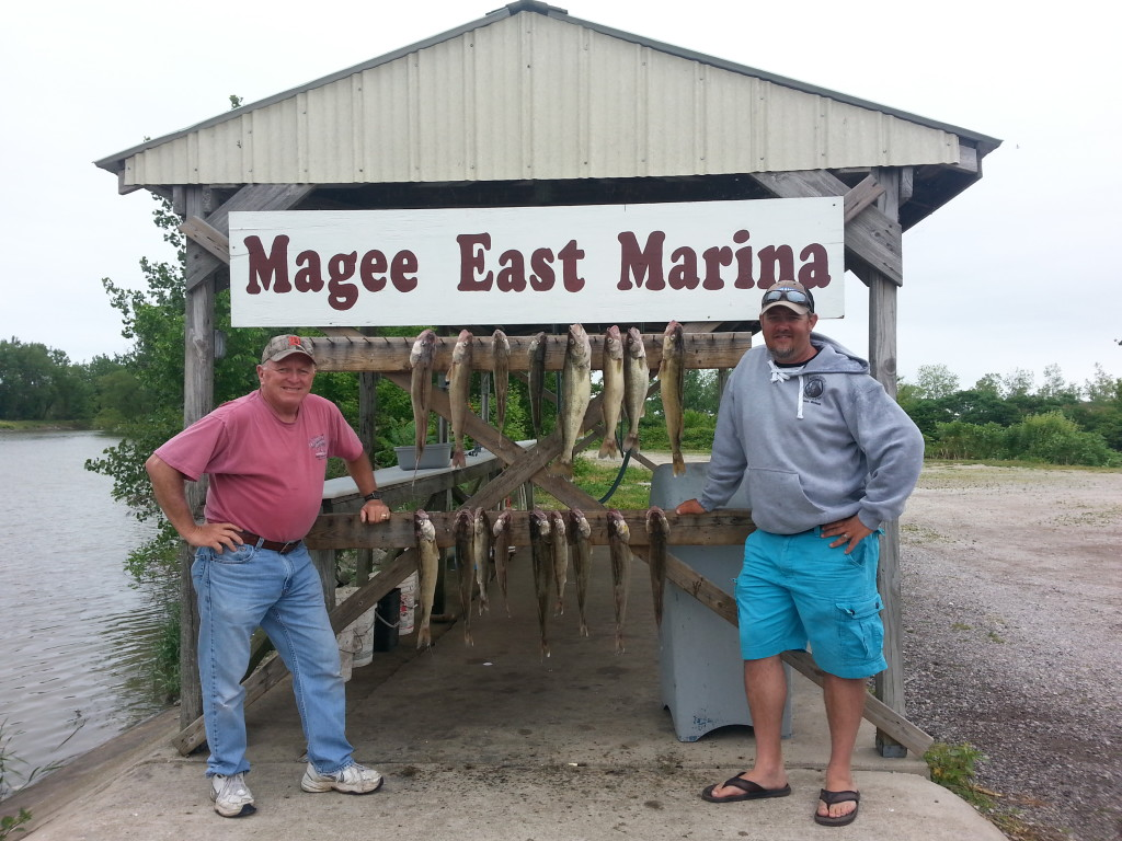 walleye trolling charter lake erie june 2014